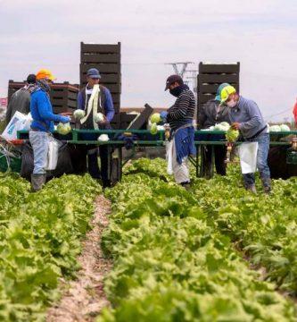 تسوية أوضاع المهاجرين في القطاع الفلاحي إسبانيا الإقامة القانونية التصاريح العمل
