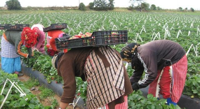 وضعية مأساوية للعمالة في الاندلس المهاجرين