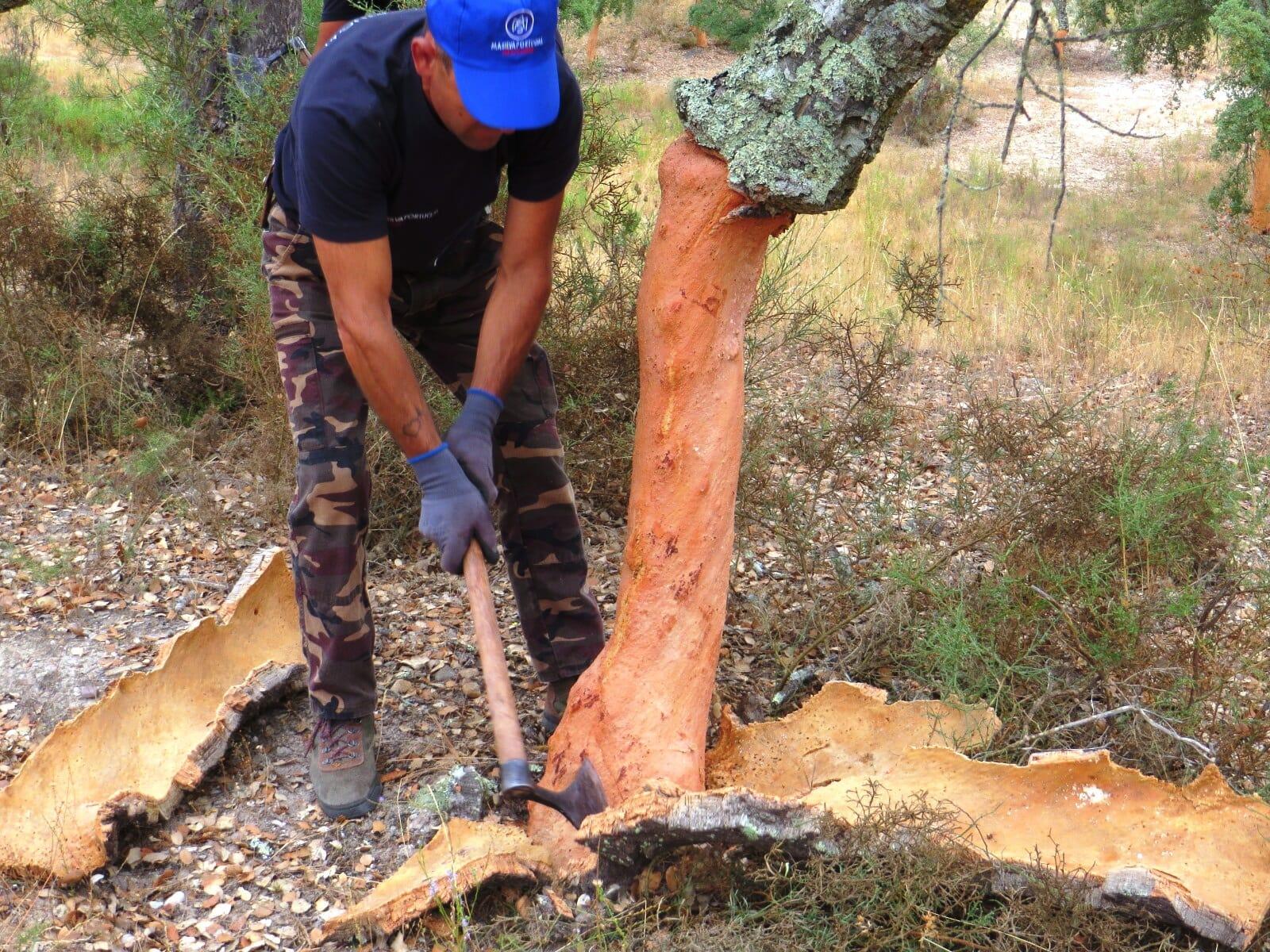 شجرة قطع الأشجار