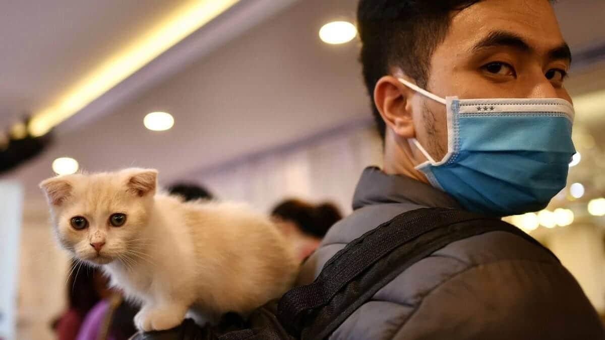 انتقال فيروس كورونا من القطط إلى البشر