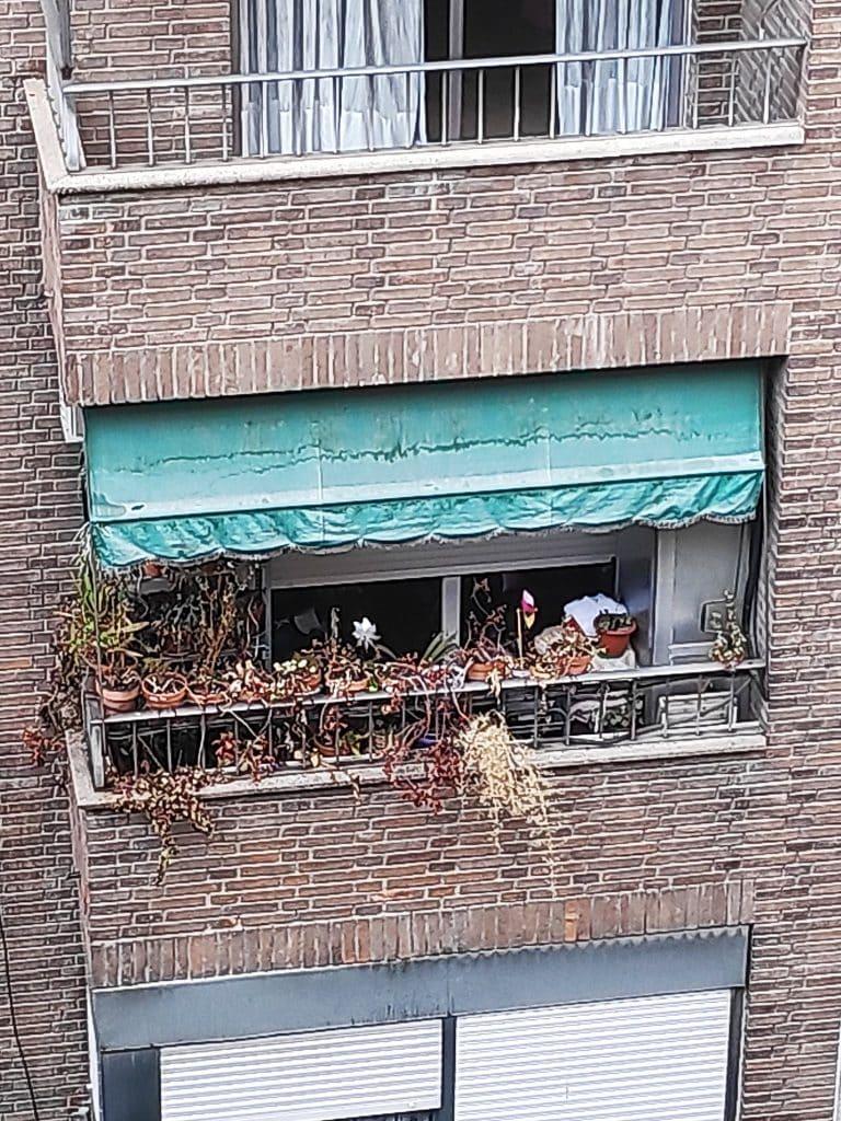 مأساة كورونا مدريد الزهور كبار السن الوفيات فيروس كورونا