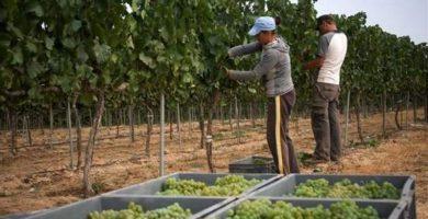 العمالة في القطاع الفلاحي مساعدة حكومة كاستيا لامنتشا