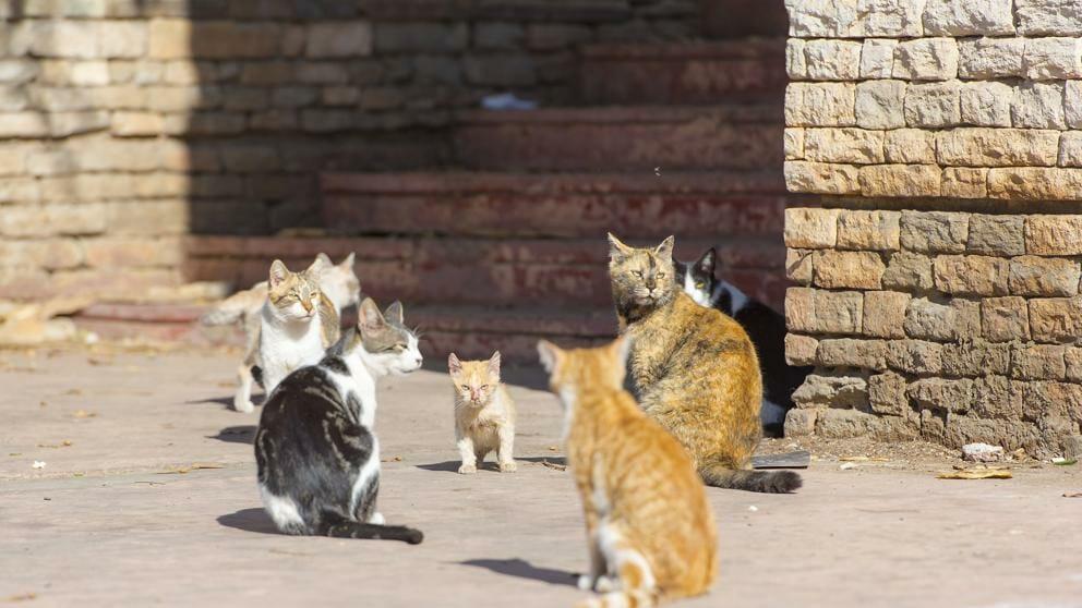 حملة اصطياد قططاً ضالة قطاً الشوارع مبلغ 20 يورو سرقسطة البلدية