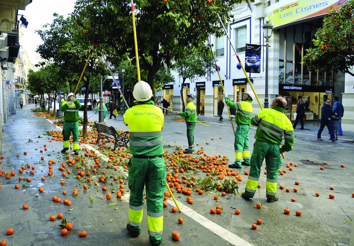 قطف البرتقال