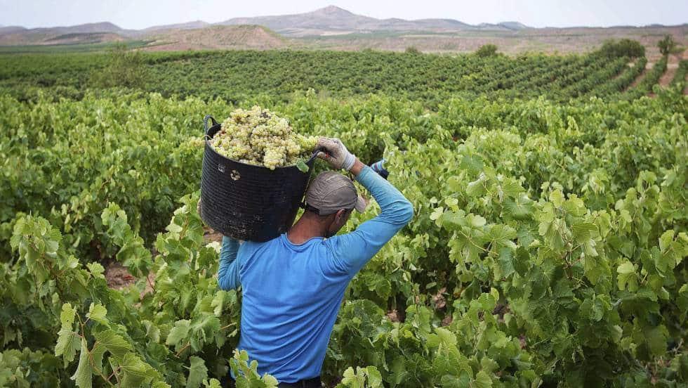 العمال الإسبان في الحقول الفرنسية