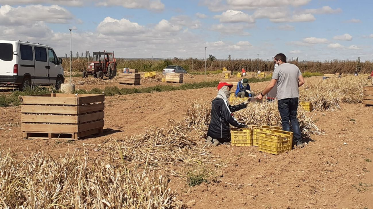 عمال الحقول المهاجرين