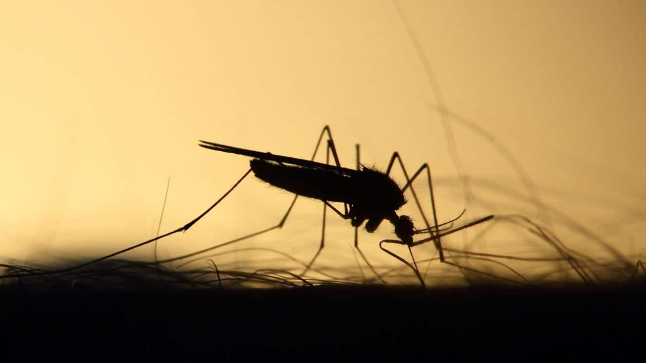 فيروس النيل إشبيلية