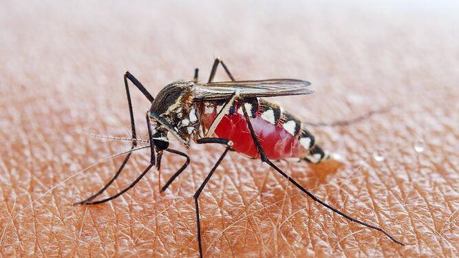 فيروس حمى النيل