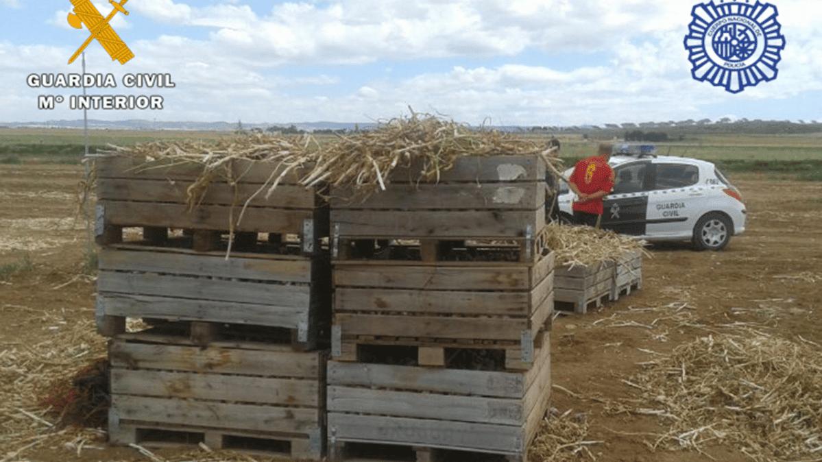 العمال في الحقول