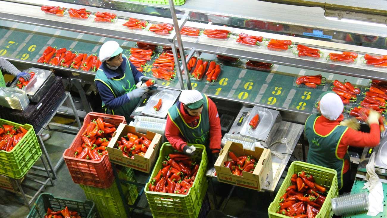 مصنع جديد الخضر والفواكه